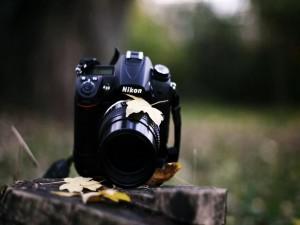 Cámara Nikon y hojas secas