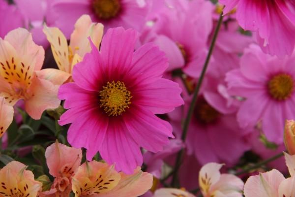 Flores rosas y astromelias