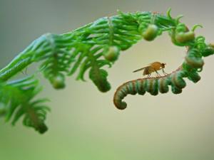 Una hermosa fotografía de un insecto