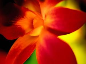 Postal: Flor con pétalos rojos