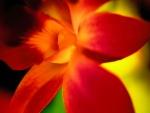 Flor con pétalos rojos