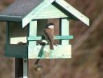 Pájaro posado en su casita