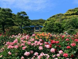 Rosas y árboles junto a una casa