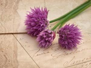 Postal: Flores sobre una tarjeta