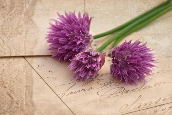 Flores sobre una tarjeta