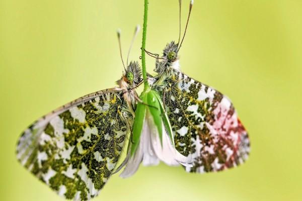 Mariposas sobre una flor