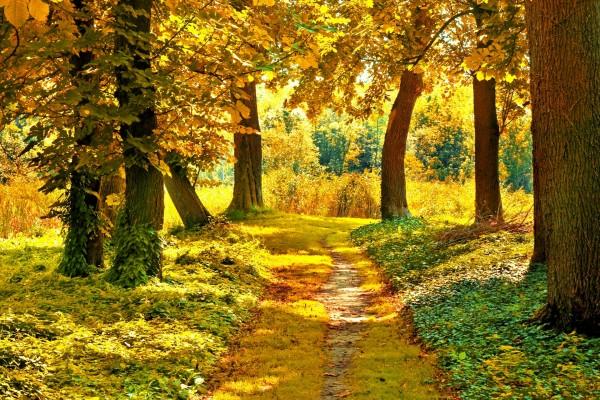 Camino amarillo entre los árboles otoñales
