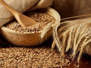 Semillas y espigas de trigo
