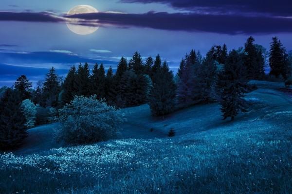 La luna brillando sobre el bosque