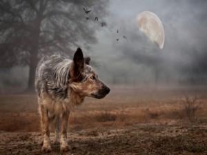 Postal: Lobo vagando en luna llena