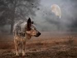 Lobo vagando en luna llena
