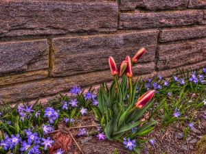 Postal: Flores junto a una tapia