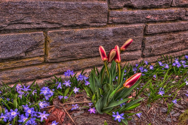 Flores junto a una tapia