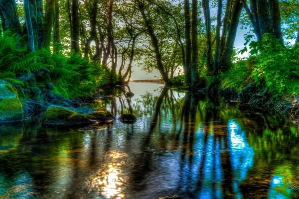 Río atravesando el bosque