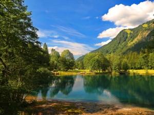 Postal: Árboles en el lago