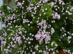 Postal: Florecillas en el arbusto