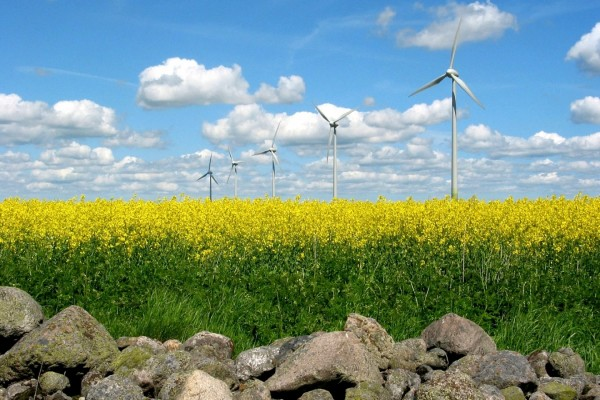 Molinos en un campo de flores amarillas