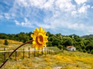 Bonita flor amarilla en el paisaje