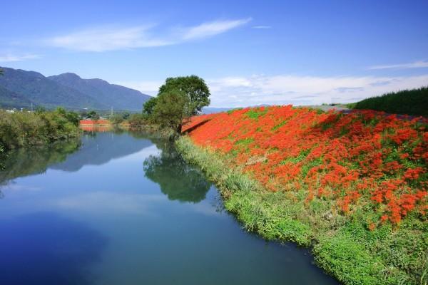 Flores rojas en la orilla del río