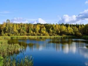 Árboles y vegetación rodeando el lago
