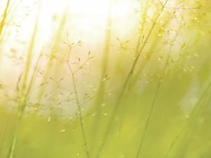 Las finas ramas de una planta