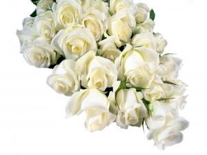 Ramo original de rosas blancas