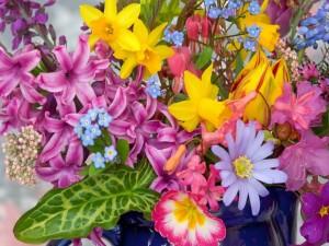 Flores de llamativos colores