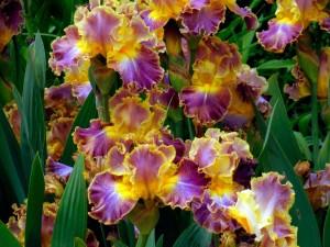 Postal: Flores con pétalos en varios colores