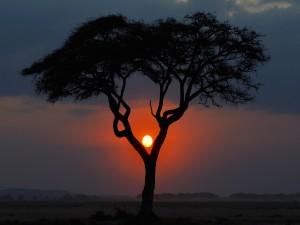 Postal: El sol del atardecer entre las ramas del árbol