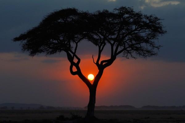 El sol del atardecer entre las ramas del árbol