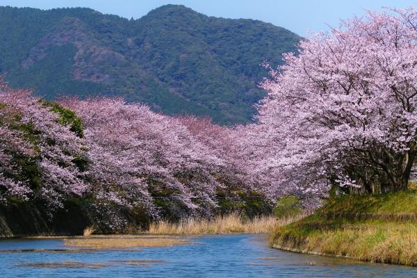 Árboles en flor a orillas del río