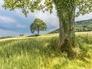 Nubes sobre la verde pradera