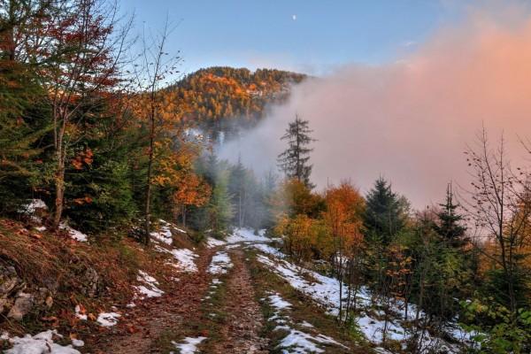 Niebla en el camino