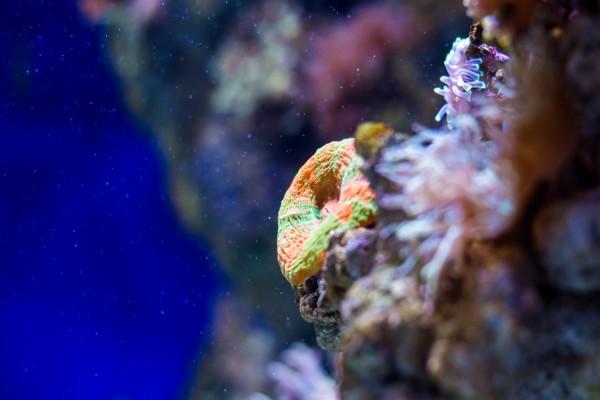 Esponja en el fondo del mar