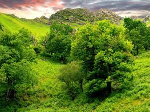 Árboles frondosos en la montaña