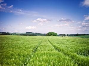 Hierba verde poblando el campo