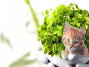 Postal: Gatito dentro de la maceta