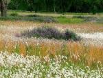 Campo con flores y hierbas