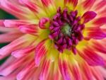 Flor con bonitos colores