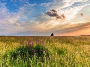 Hierba y flores en un campo al amanecer