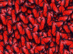 Postal: Conjunto de mariposas rojas