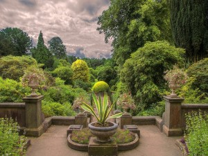 Jardín con plantas, arbustos y flores
