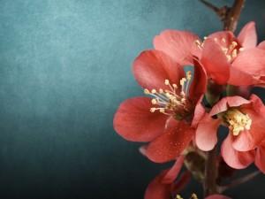 Bellas flores rosas en la rama