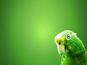 Loro verde