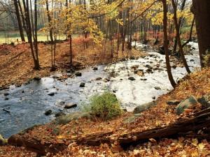 Un río visto en otoño