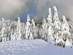 Gran capa de nieve sobre los pinos