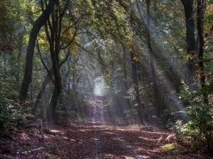 Los rayos del sol penetran en el bosque