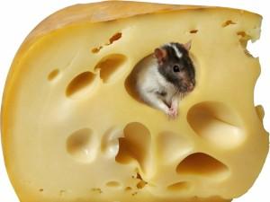 Ratón escondido en un trozo de queso