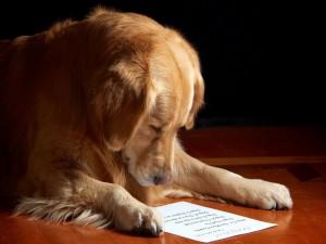 Postal: Perro leyendo una carta