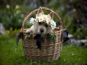 Perro con una corona de flores dentro de una cesta